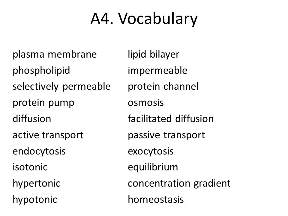 A4. Vocabulary