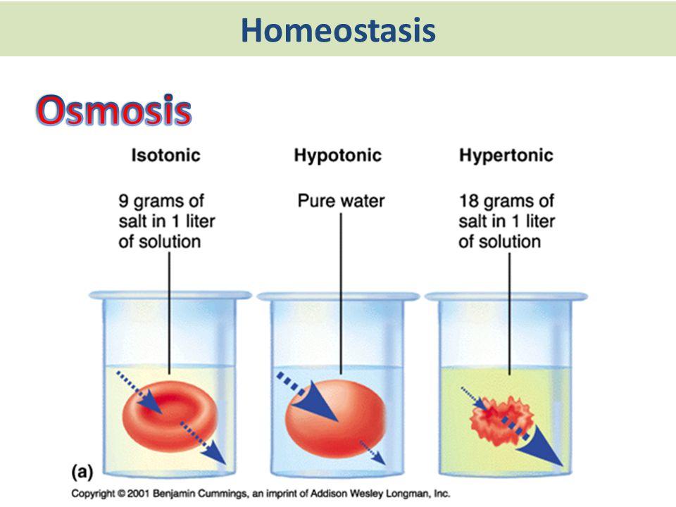 Homeostasis Osmosis