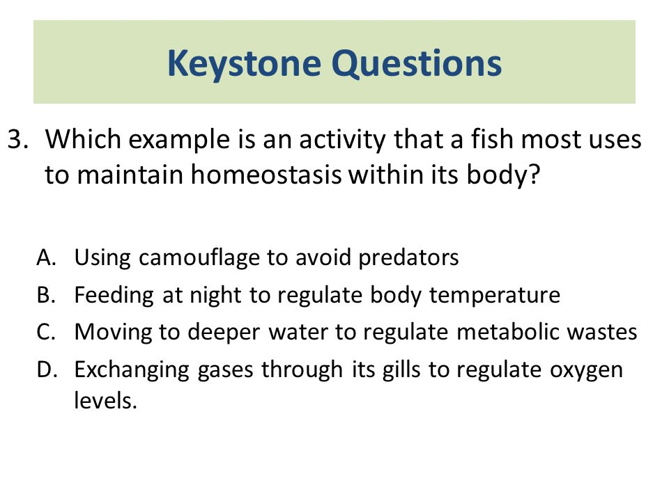 Keystone Questions Which example is an activity that a fish most uses to maintain homeostasis within its body