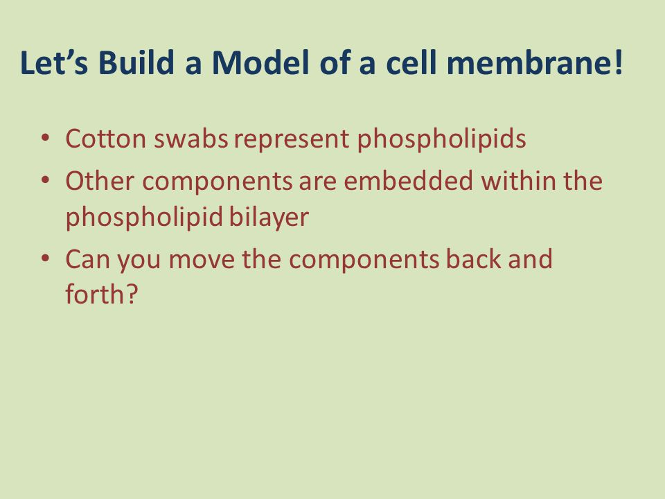Let's Build a Model of a cell membrane!