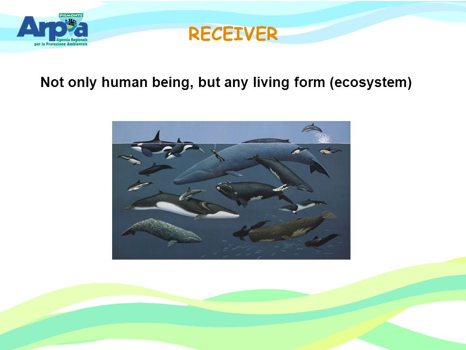 Not only human being, but any living form (ecosystem)