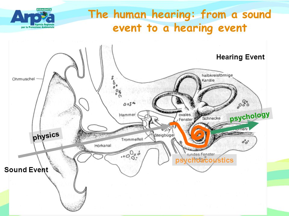 The human hearing: from a sound event to a hearing event
