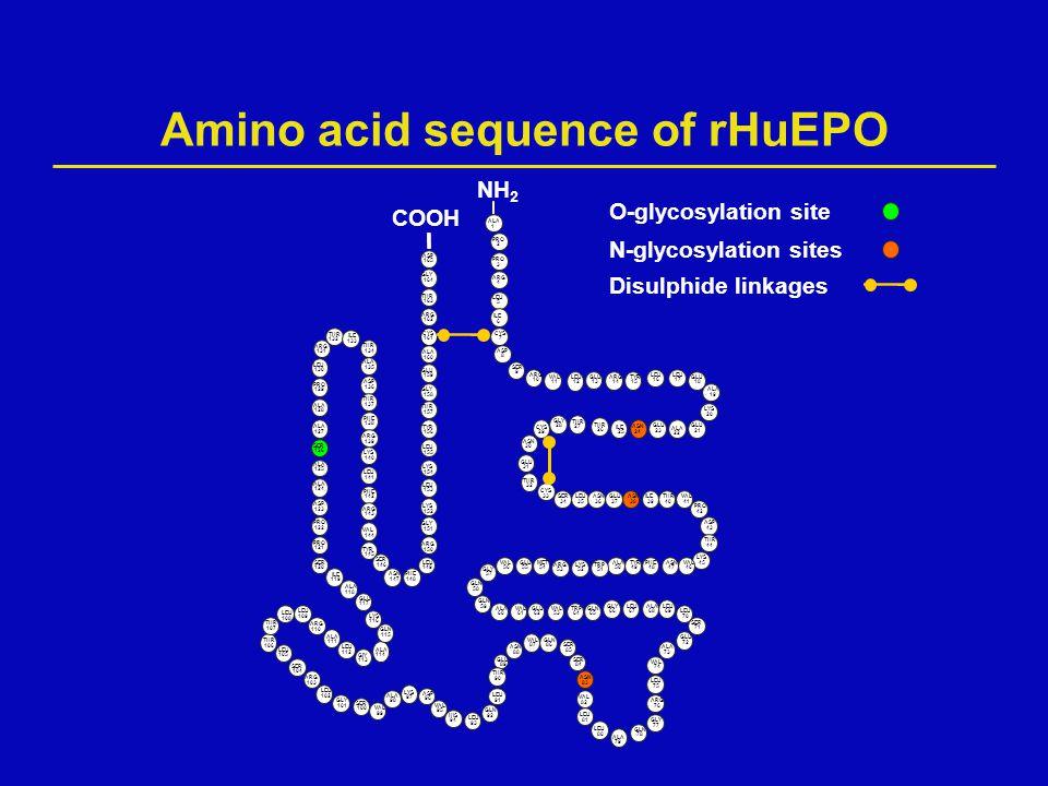 Amino acid sequence of rHuEPO