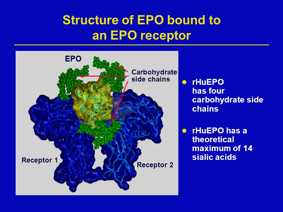 Structure of EPO bound to an EPO receptor