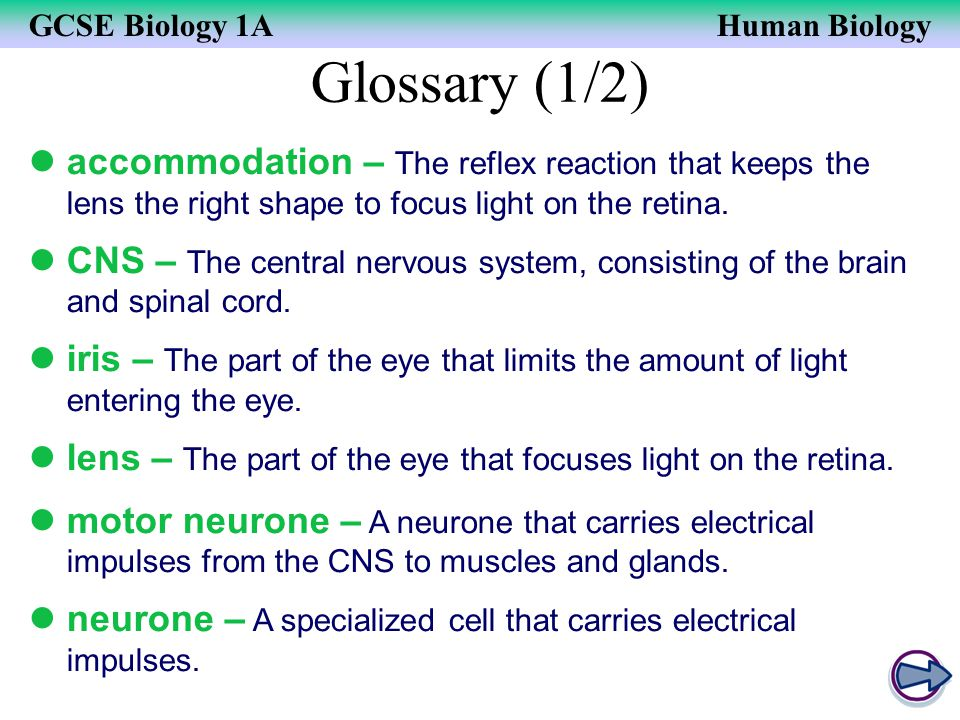 Glossary (1/2) accommodation – The reflex reaction that keeps the lens the right shape to focus light on the retina.