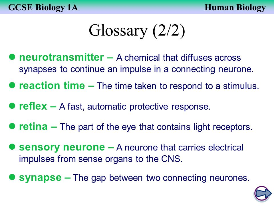 Glossary (2/2) neurotransmitter – A chemical that diffuses across synapses to continue an impulse in a connecting neurone.