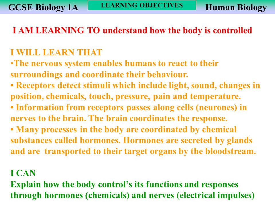 I AM LEARNING TO understand how the body is controlled