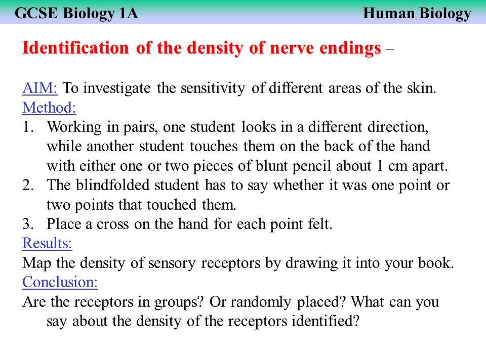Identification of the density of nerve endings –