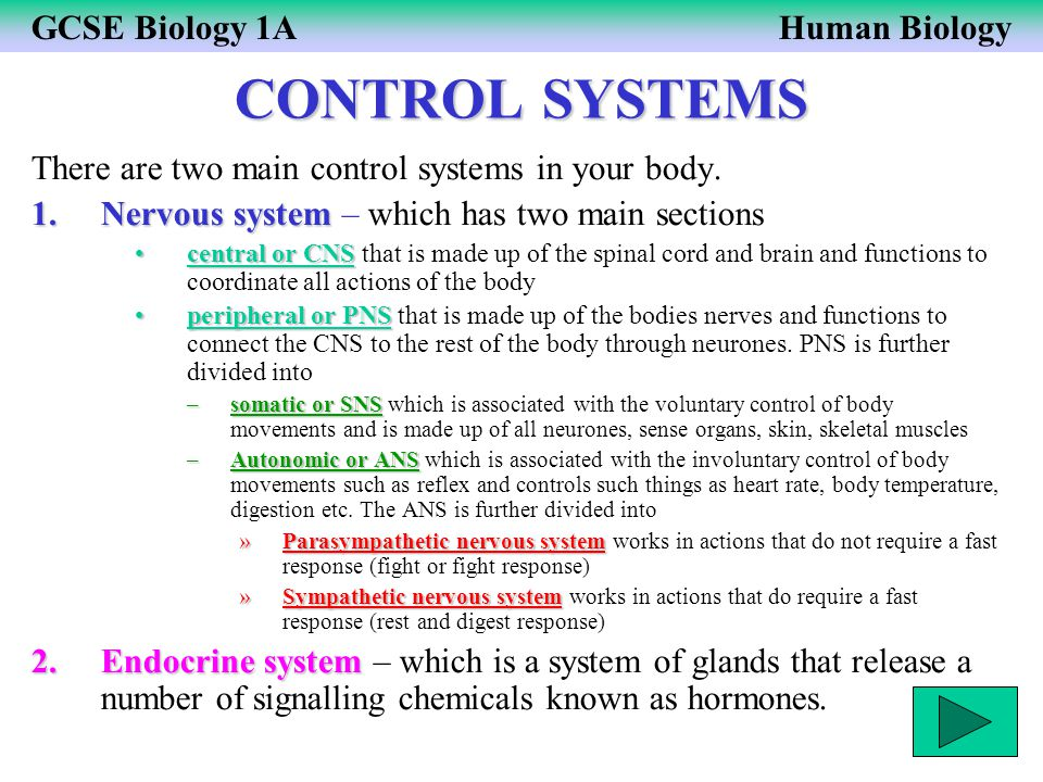 CONTROL SYSTEMS There are two main control systems in your body.