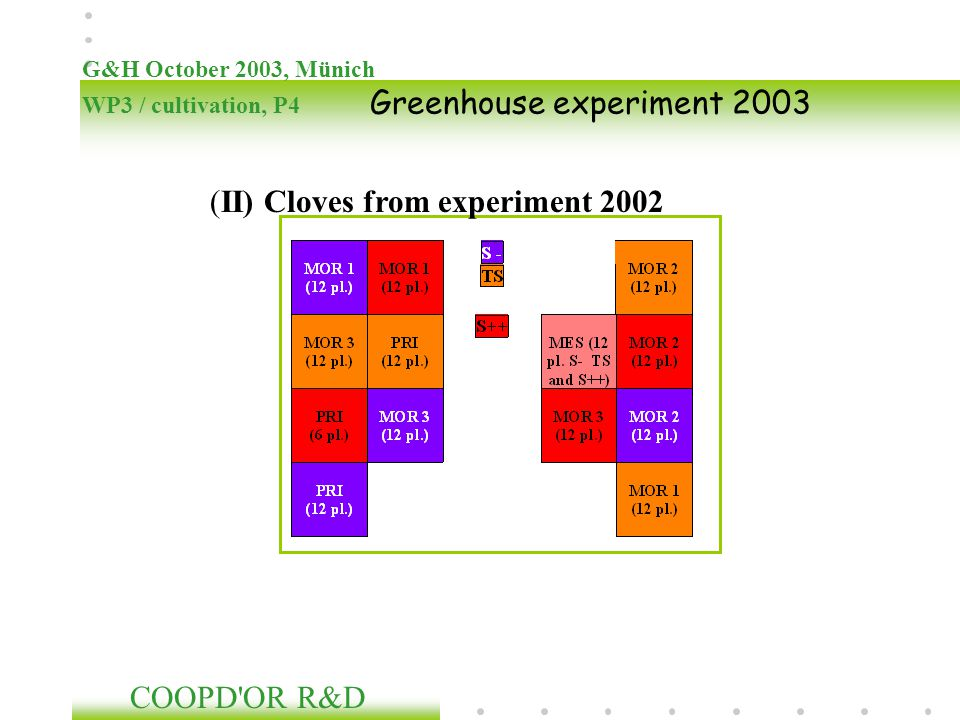 (II) Cloves from experiment 2002
