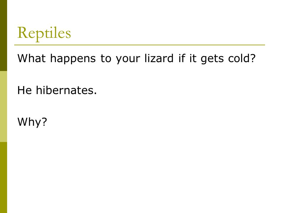 Reptiles What happens to your lizard if it gets cold He hibernates.