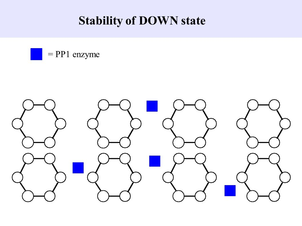 Stability of DOWN state