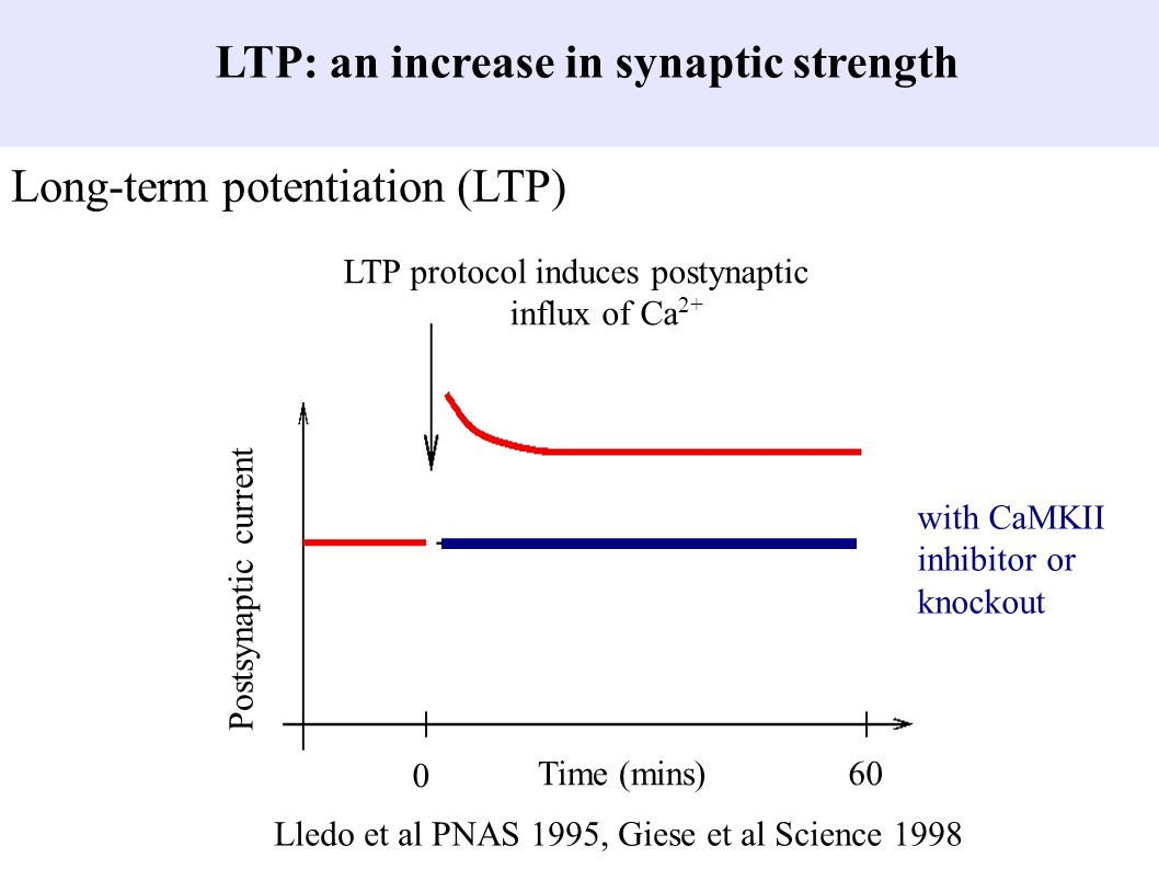 LTP: an increase in synaptic strength