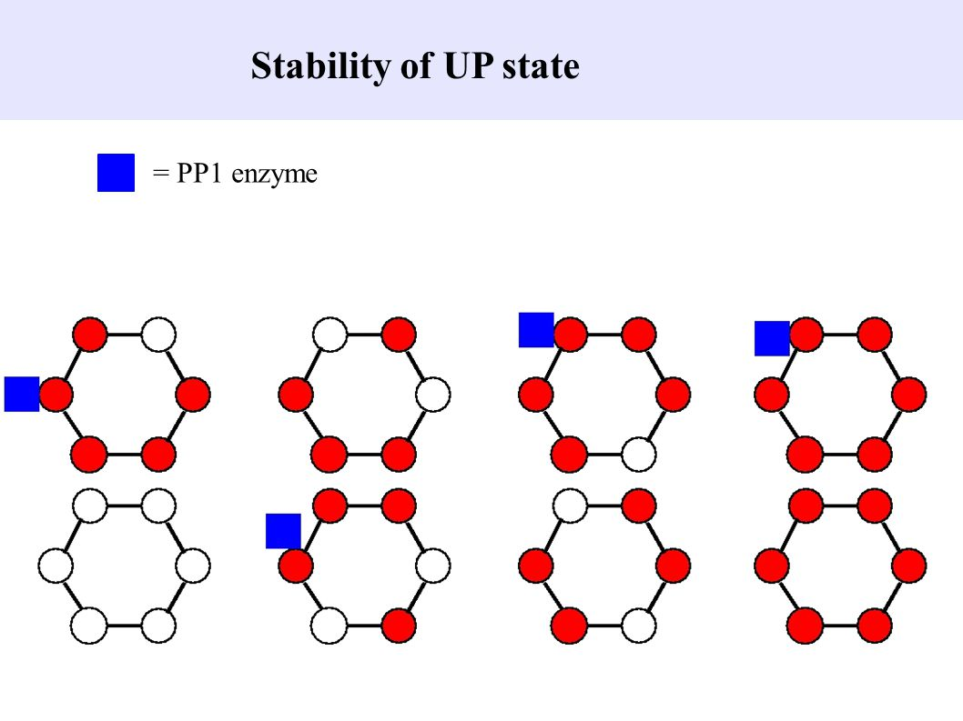 Stability of UP state = PP1 enzyme