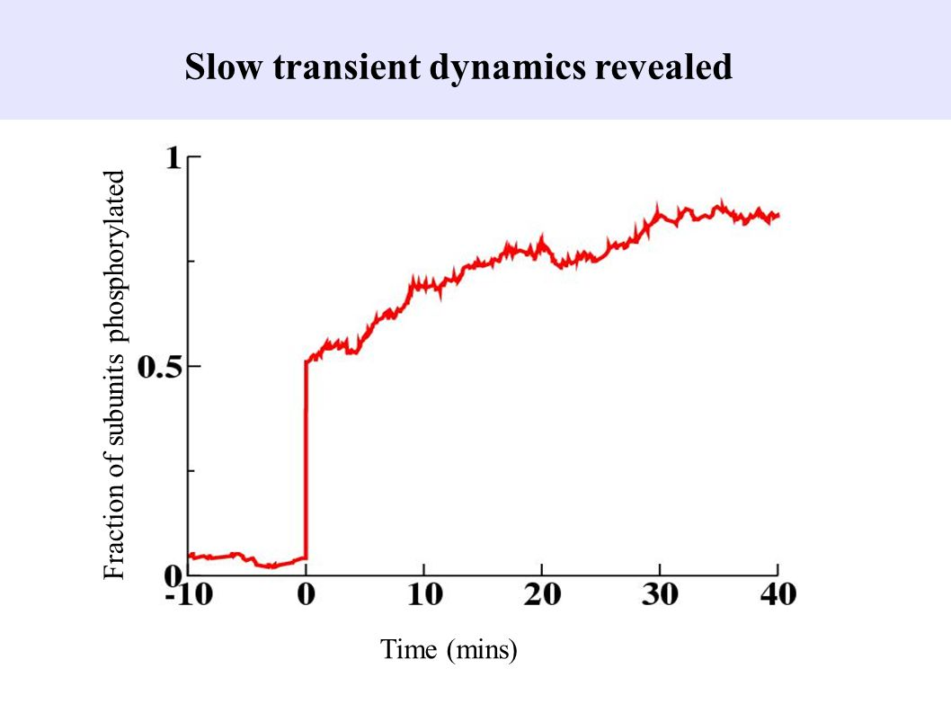 Slow transient dynamics revealed
