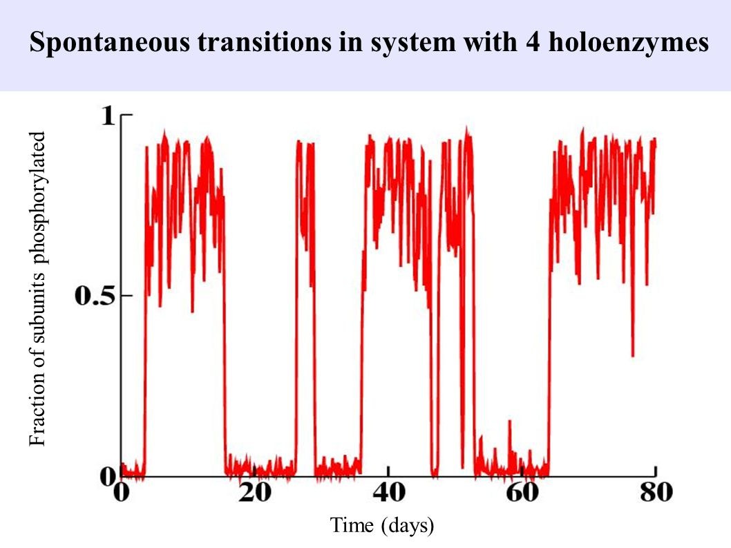 Spontaneous transitions in system with 4 holoenzymes