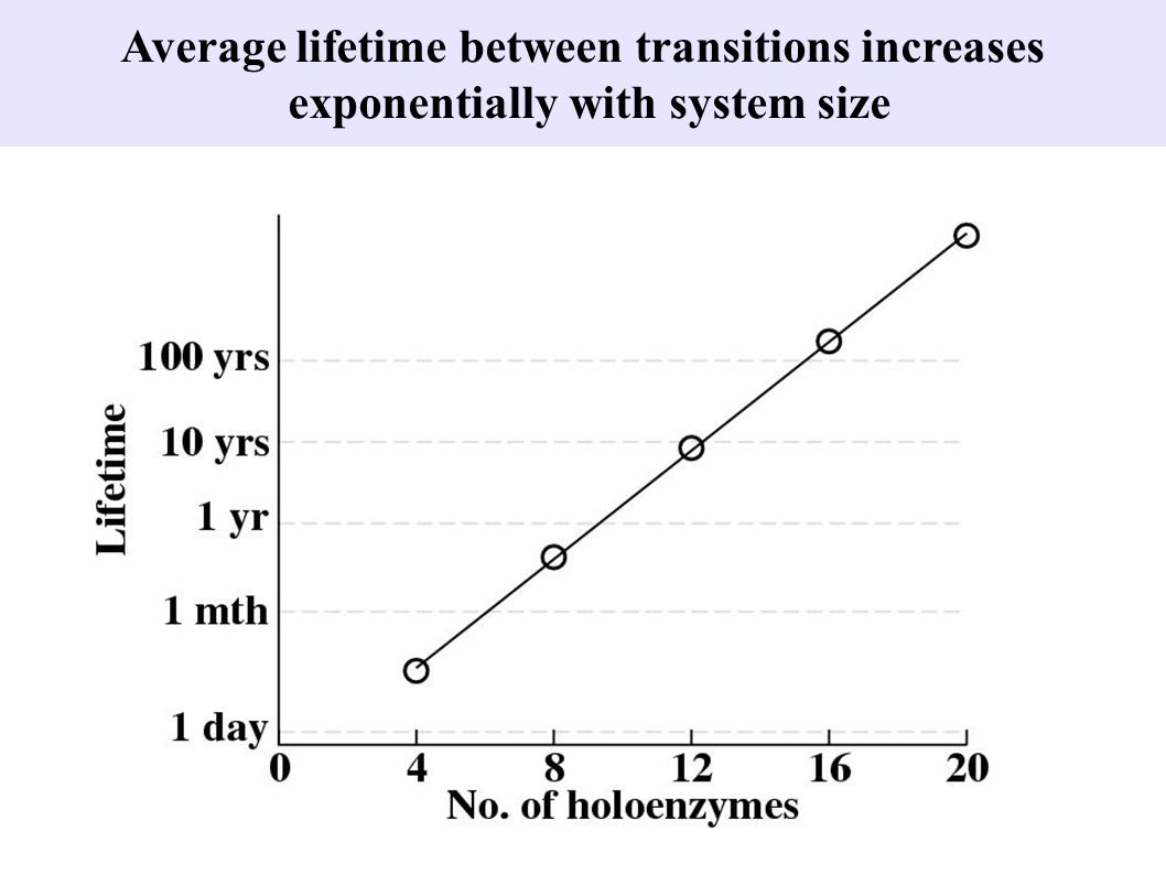 Average lifetime between transitions increases