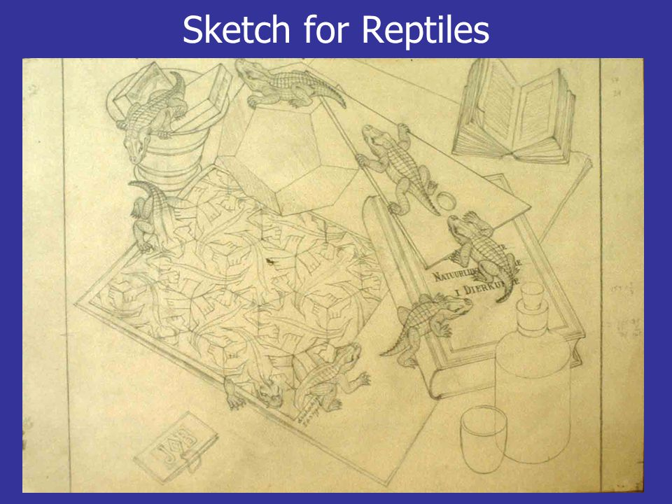 Sketch for Reptiles