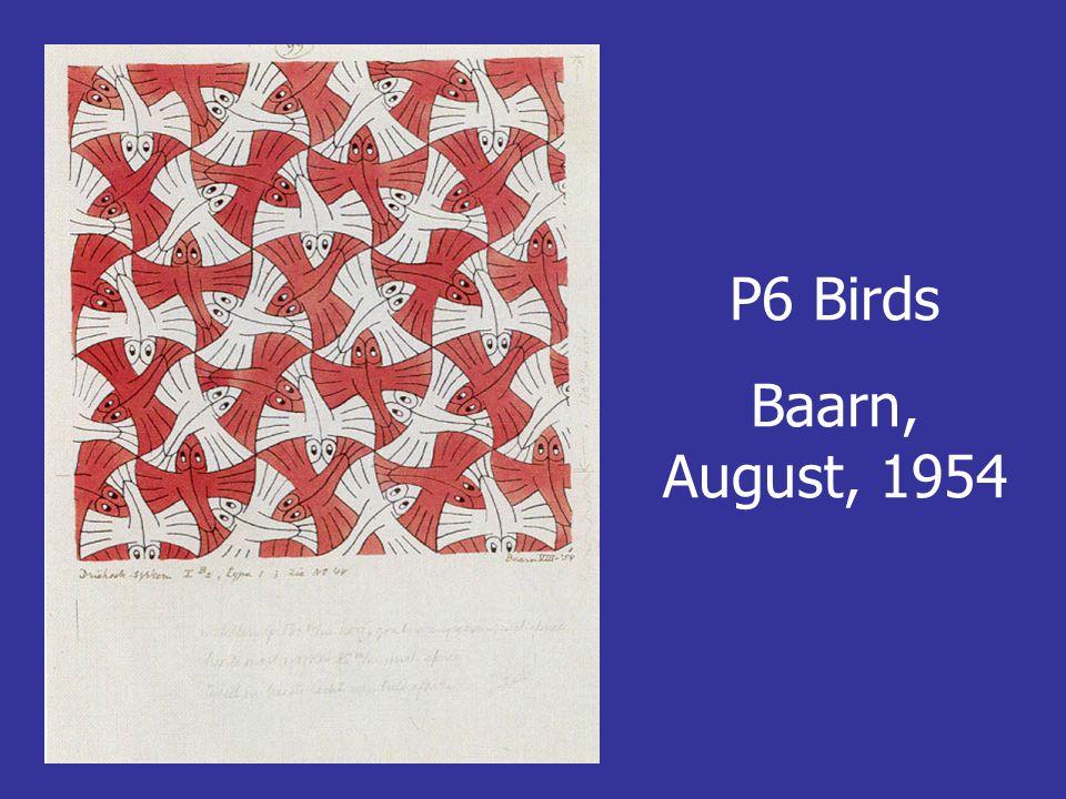 P6 Birds Baarn, August, 1954