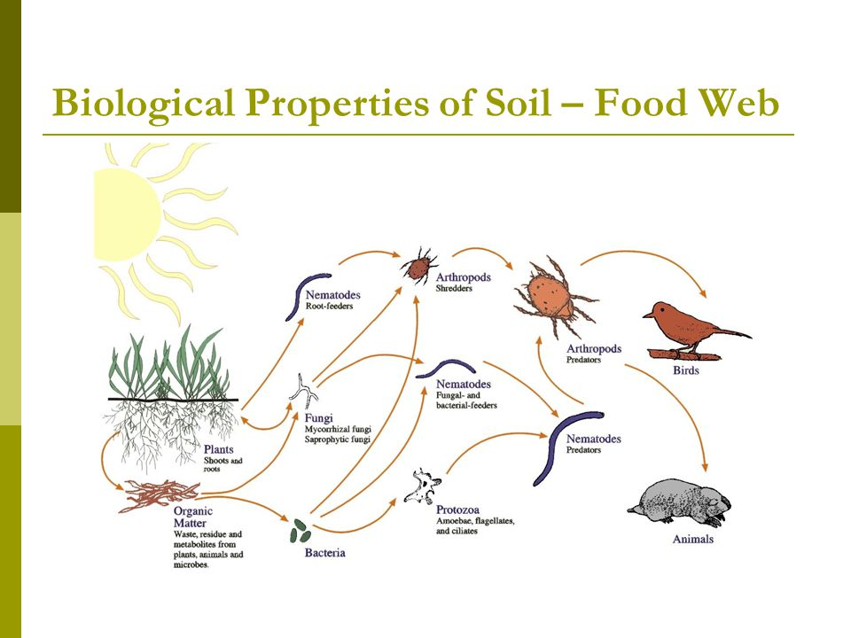 Biological Properties of Soil – Food Web