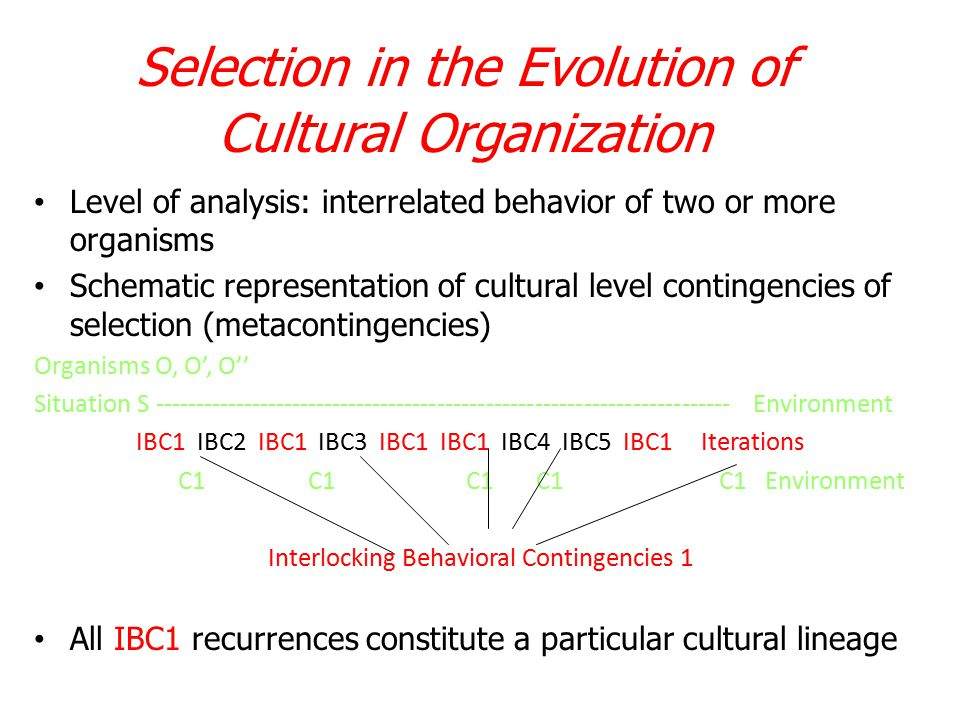 Selection in the Evolution of Cultural Organization