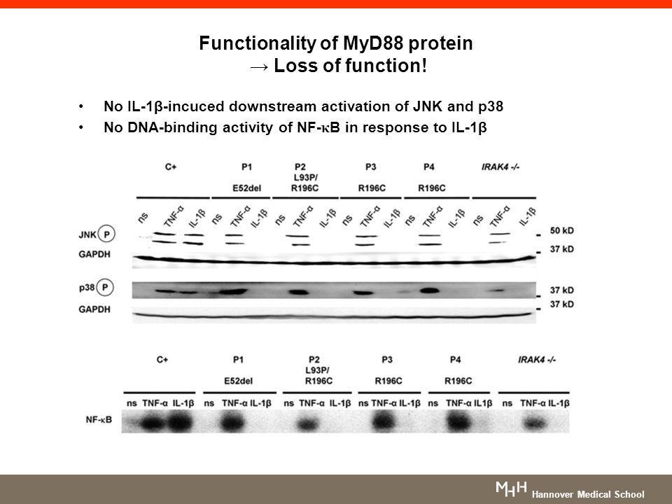 Functionality of MyD88 protein → Loss of function!