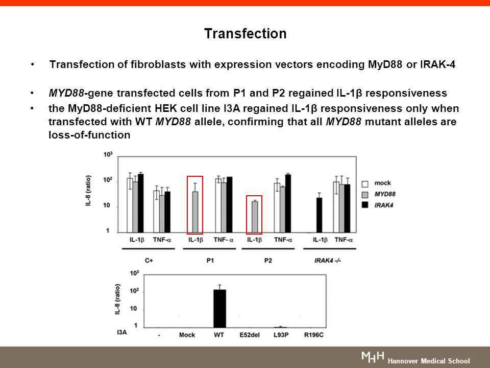 Transfection Transfection of fibroblasts with expression vectors encoding MyD88 or IRAK-4.