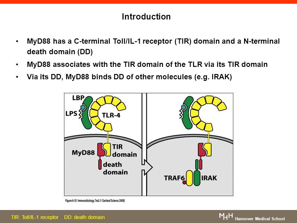 Introduction MyD88 has a C-terminal Toll/IL-1 receptor (TIR) domain and a N-terminal death domain (DD)