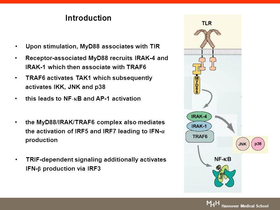 Introduction Upon stimulation, MyD88 associates with TIR