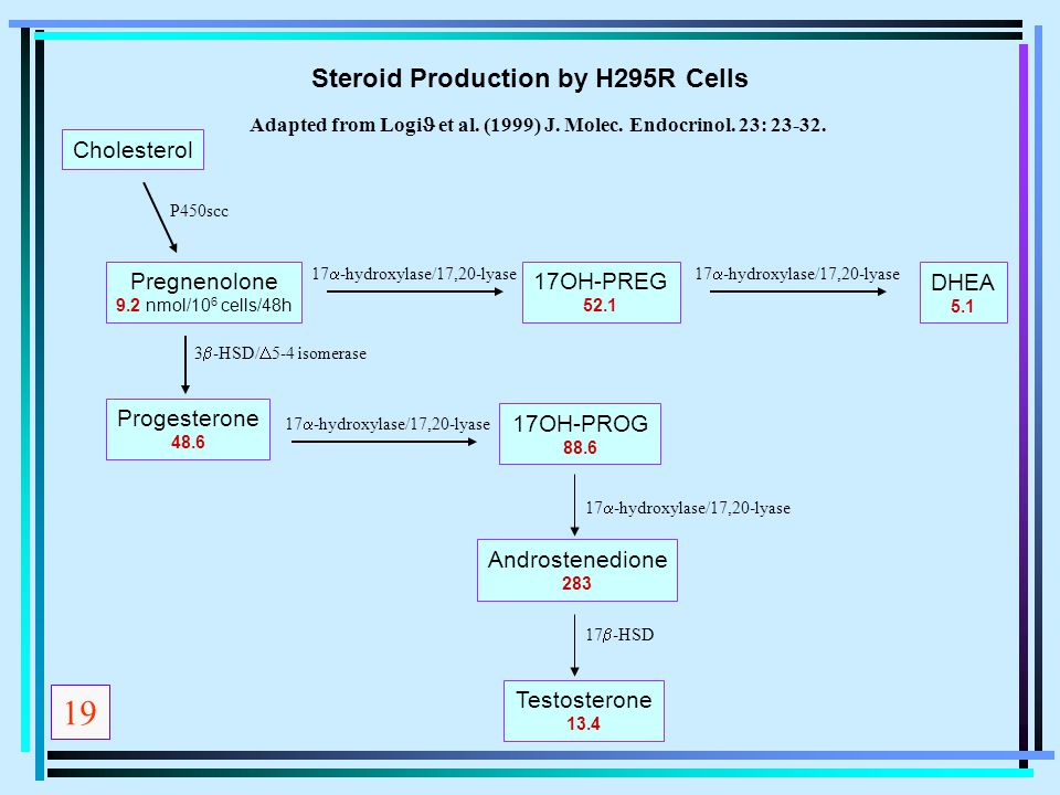 19 Steroid Production by H295R Cells Cholesterol Pregnenolone