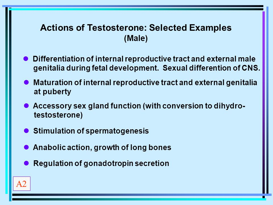 Actions of Testosterone: Selected Examples