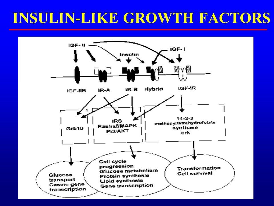 INSULIN-LIKE GROWTH FACTORS