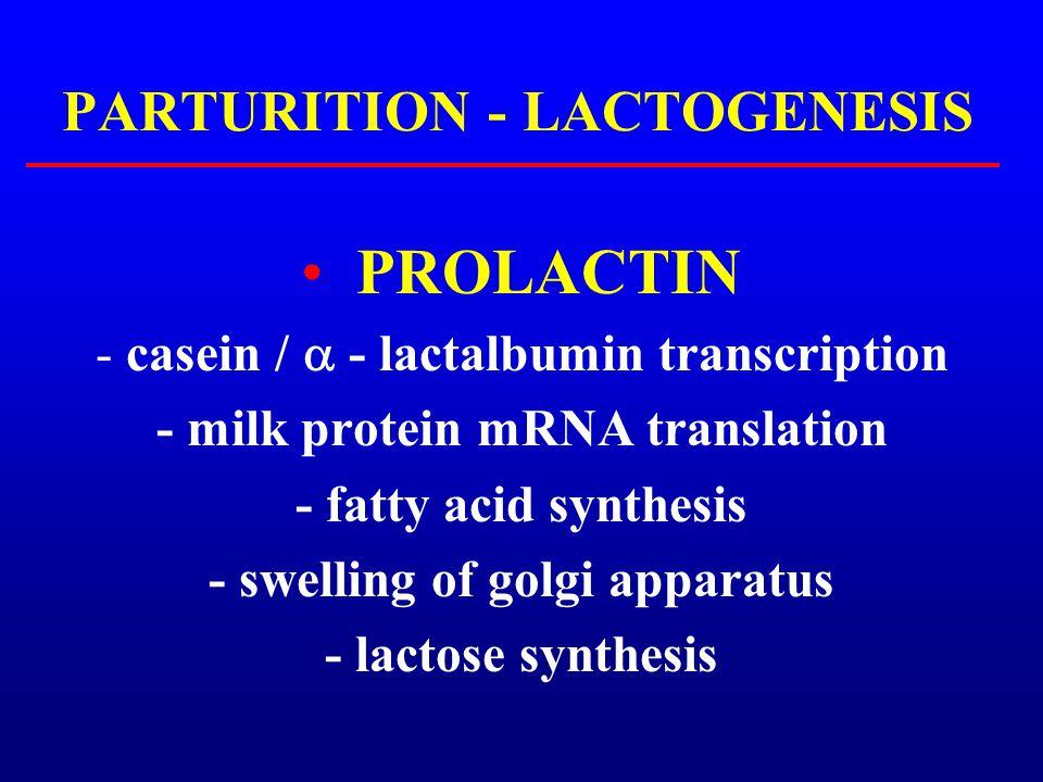 PARTURITION - LACTOGENESIS