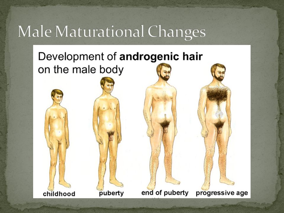 Male Maturational Changes