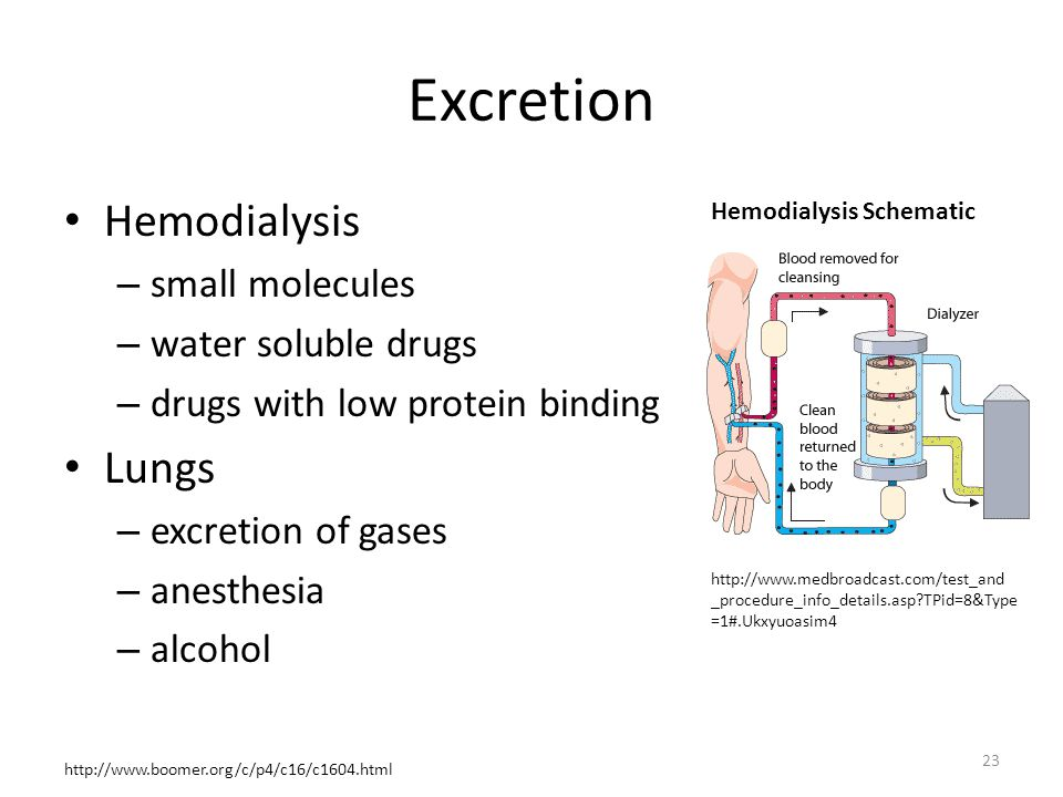 Excretion Hemodialysis Lungs small molecules water soluble drugs