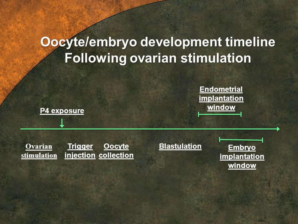 Oocyte/embryo development timeline Following ovarian stimulation
