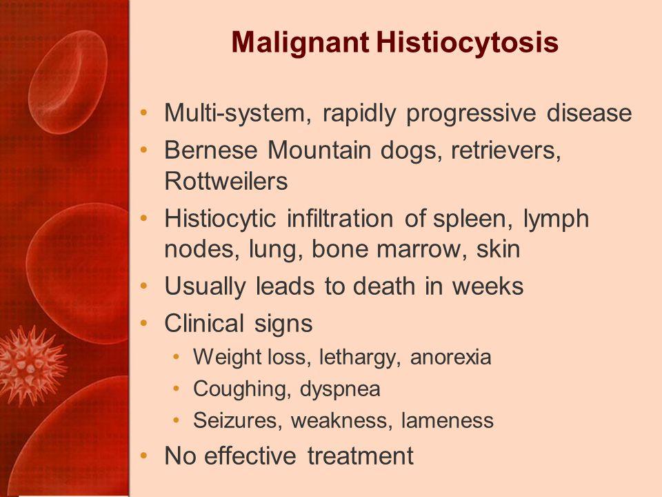 Malignant Histiocytosis