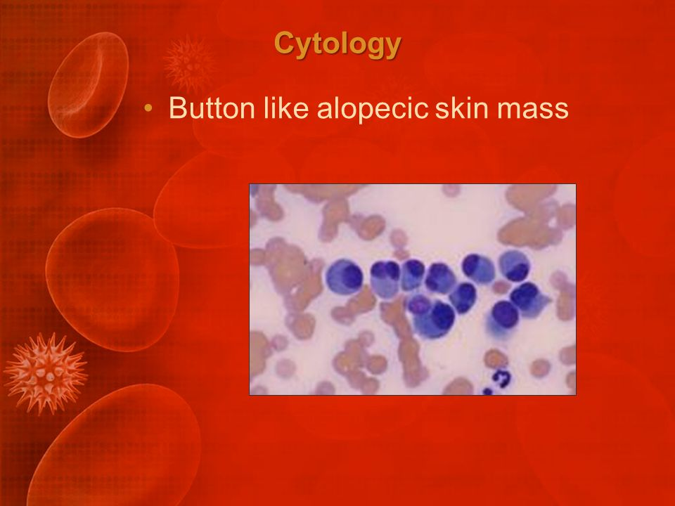 Cytology Button like alopecic skin mass