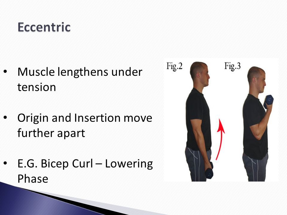 Eccentric Muscle lengthens under tension