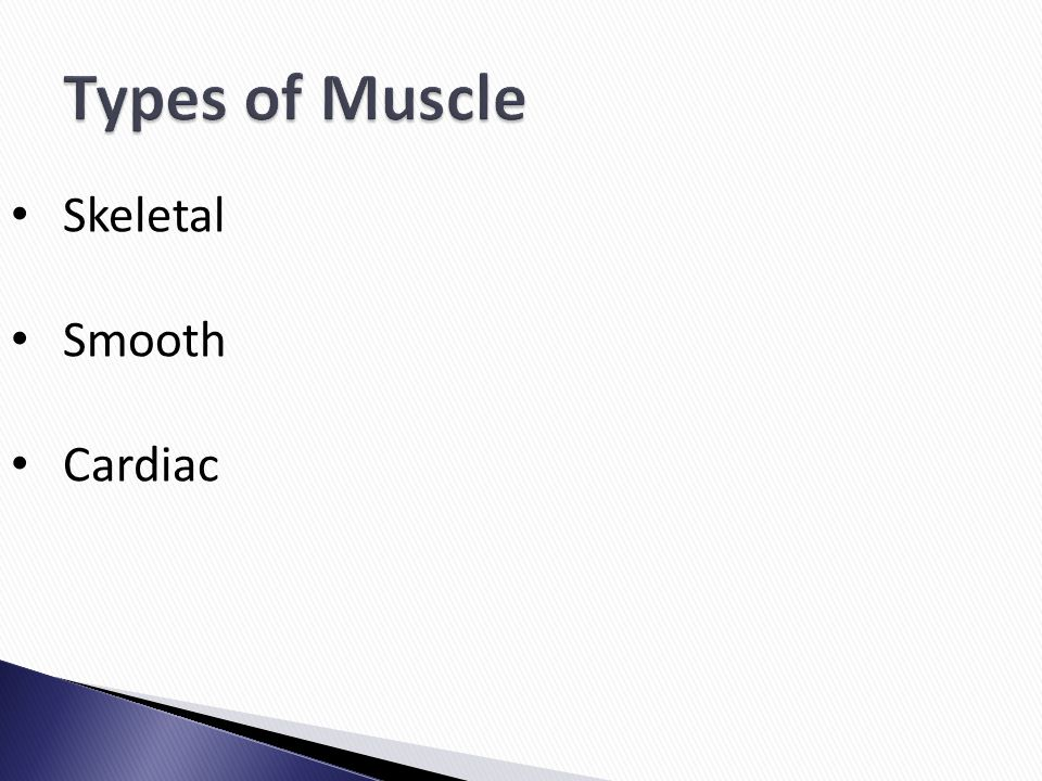 Types of Muscle Skeletal Smooth Cardiac