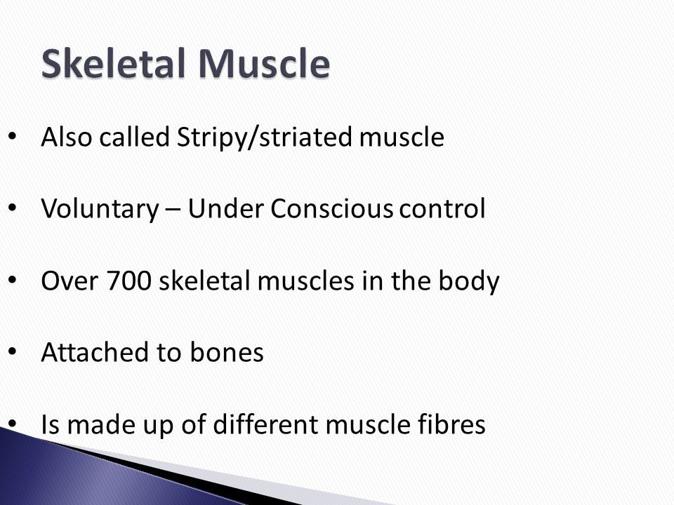 Skeletal Muscle Also called Stripy/striated muscle
