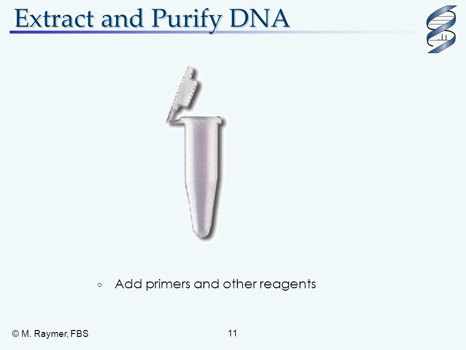 Extract and Purify DNA Add primers and other reagents © M. Raymer, FBS