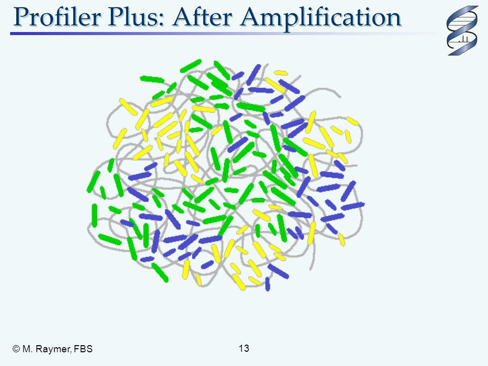 Profiler Plus: After Amplification