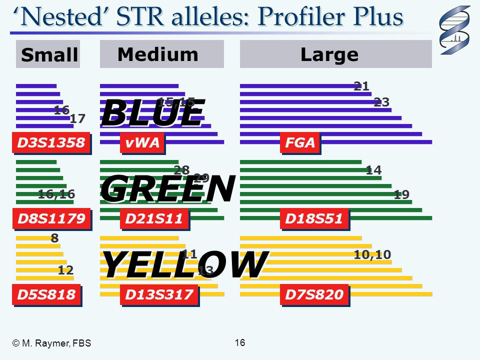 BLUE GREEN YELLOW 'Nested' STR alleles: Profiler Plus Small Medium