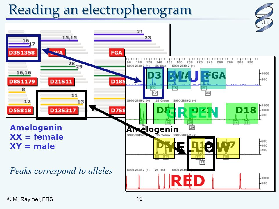 Reading an electropherogram