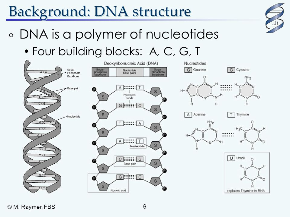 Background: DNA structure