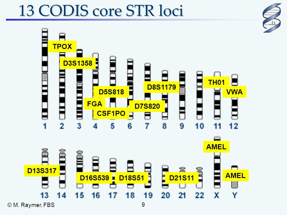 13 CODIS core STR loci TPOX D3S1358 TH01 D8S1179 D5S818 VWA FGA D7S820
