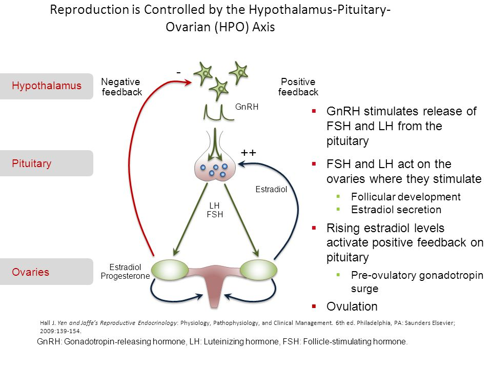 Luteal phase support an update ppt video online download 2 estradiol progesterone reproduction fandeluxe Gallery