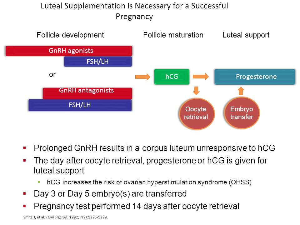 Luteal Supplementation is Necessary for a Successful Pregnancy