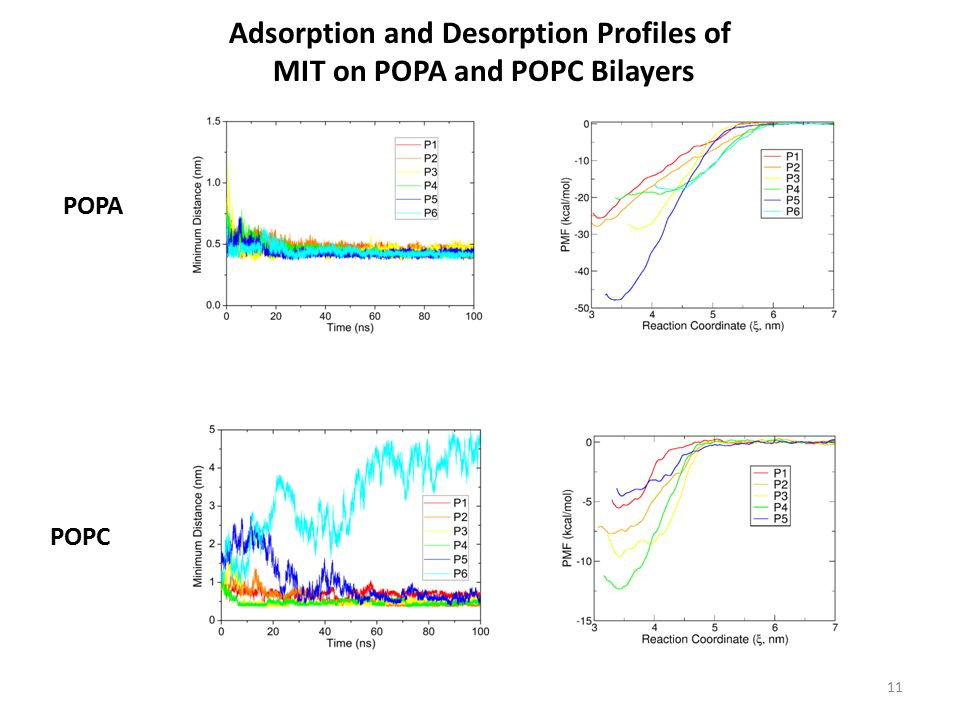 Adsorption and Desorption Profiles of MIT on POPA and POPC Bilayers